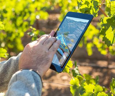 iPad en de wijngaard van morgen: wijnjaren als vroeger, vandaag